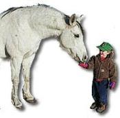 Ann Feeding Her Horse, Amos, Hay Cubes